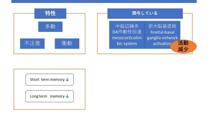 tDCSを用いたADHDモデルラットの短期記憶改善について